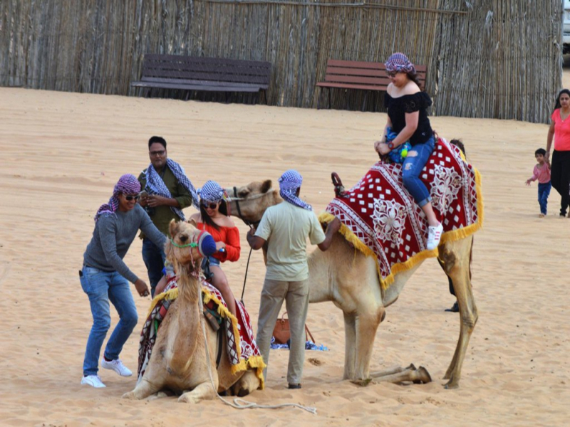 Evening Safari with Camel Ride & Sunset (Per Car Rate)